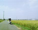 http://satsuki.sk/image/20090823_004.html